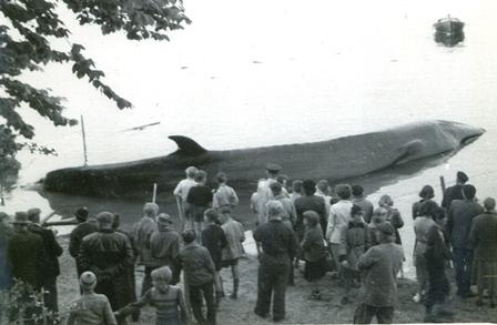 Sejhval 1955