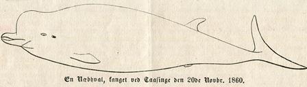 døgling 1860